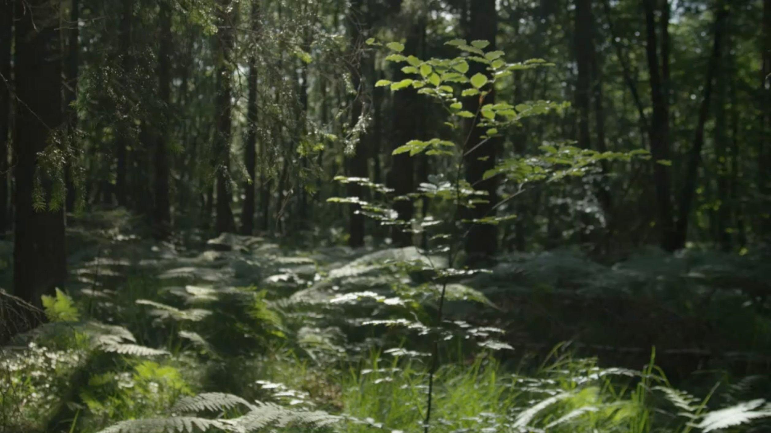 Forest-still-design-agency
